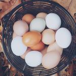 4 tipy, ako využiť škrupiny z vajíčok v záhrade