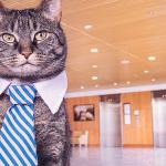 5 tipov na upratovanie pre majiteľov mačiek a psov