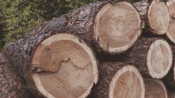Drevo z Oravy pre ten najlepší profil